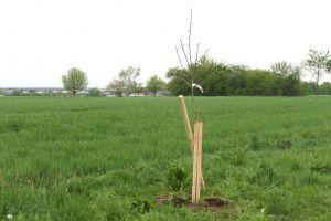 Der Koch GmbH Baum