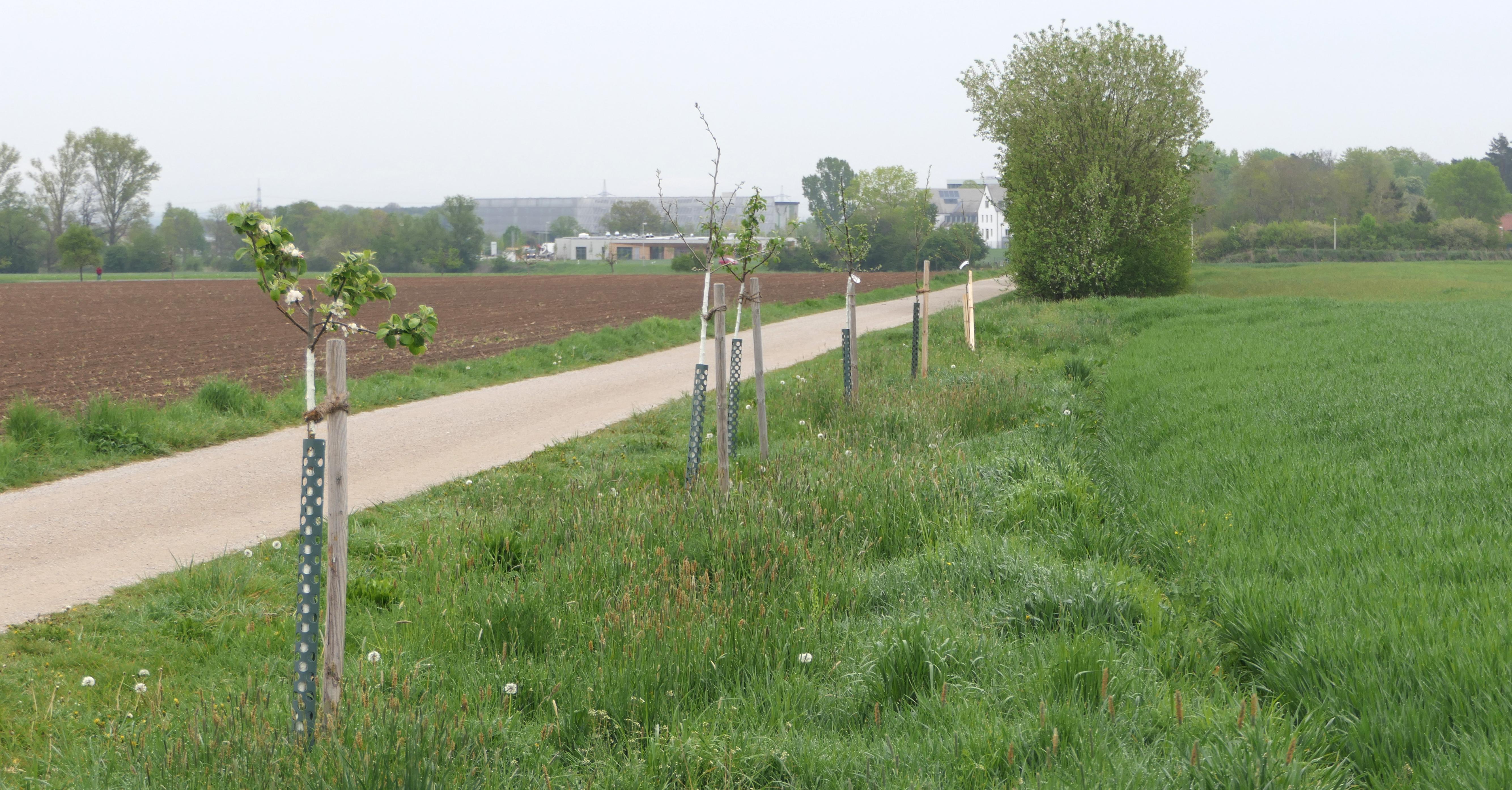 Baumpflanzungen Herzogenaurach